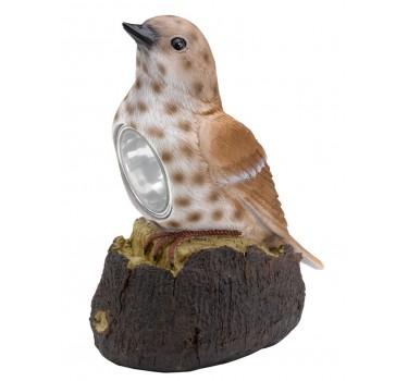 Pájaro mundo pardo